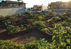 Vegetables like carrots and kale can grow in South Laguna Community Garden's coastal climate. / Photo  by Jody Tiongco