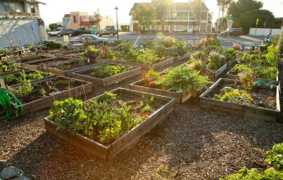 Grow_South Laguna Plant Boxes_By Jody Tiongco-9