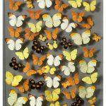 butterfly art Summertime_credit Ken Denton Jr.