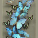 Ken Denton Butterfly Man artwork_credit Ken Denton Jr.
