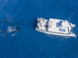 humpback whales_credit Matt Larmand/Dana Wharf Sportfishing & Whale Watching
