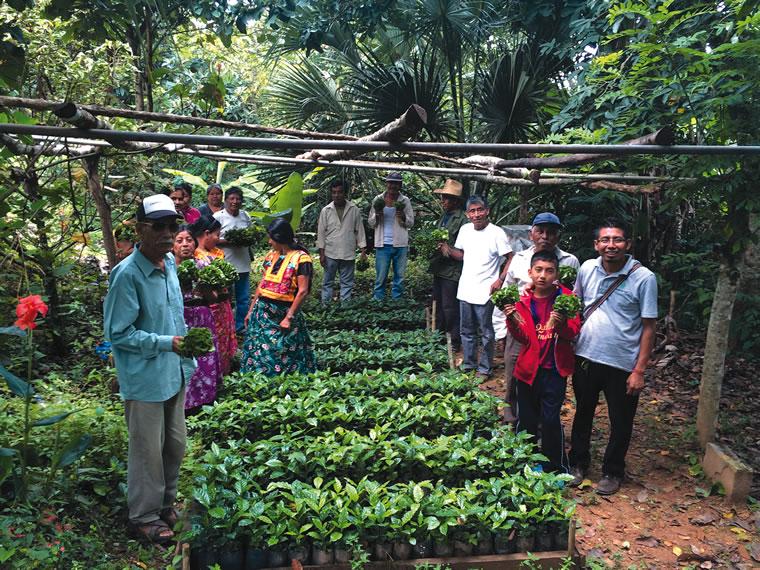 Oaxaca coffee farmers