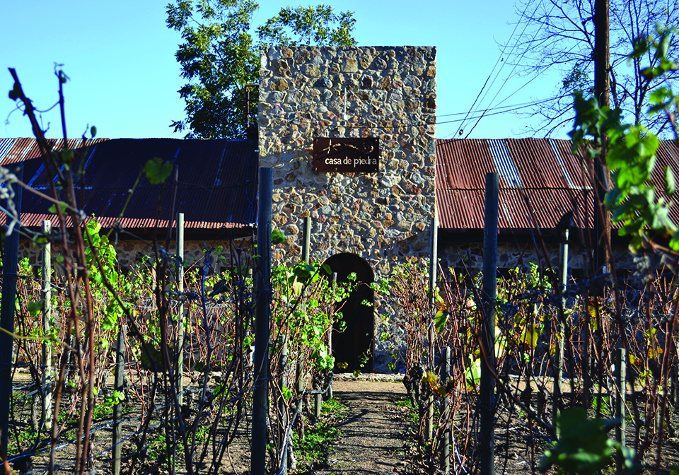 Chardonnay vineyards surround Casa de Piedra.