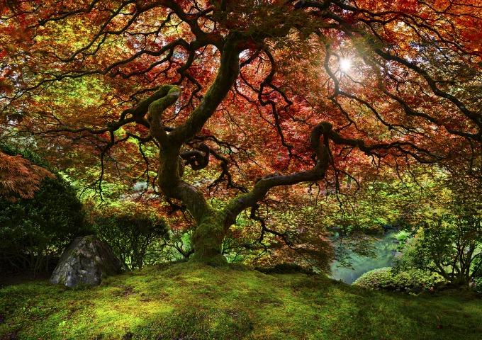 Cheyne Walls_Place of Zen