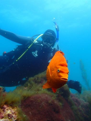 Claire Arre diving
