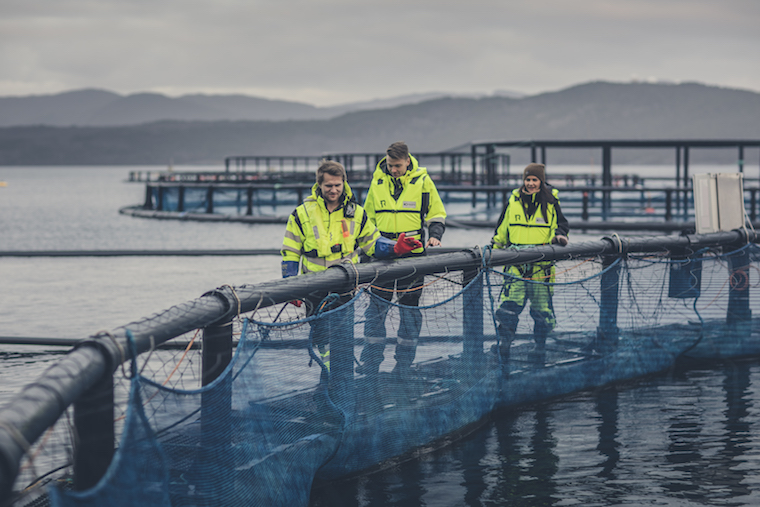 marine net pens in Norway_credit Nordic Blu
