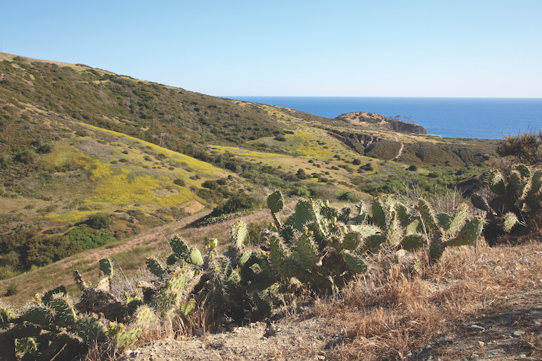 Perimeter of the Park Loop Trail at Crystal Cove_no credit needed