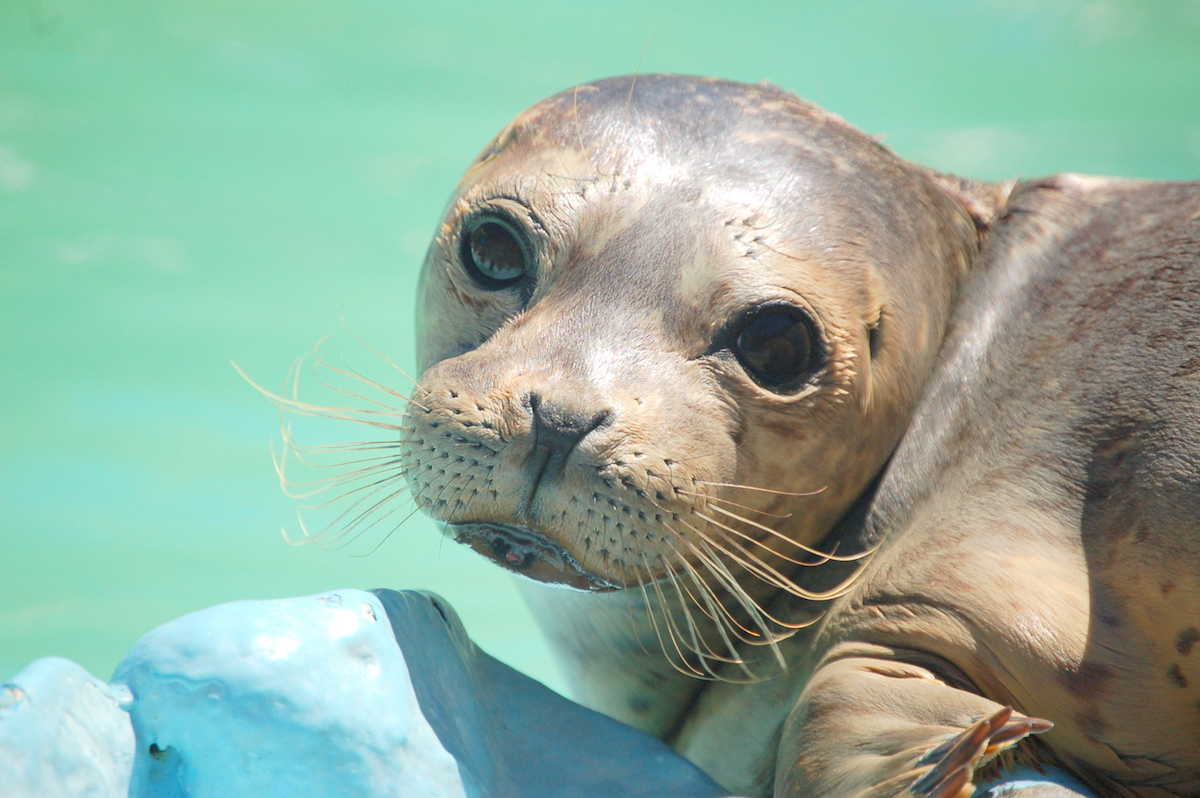 Wildlife at PMMC_credit Courtesy of Pacific Marine Mammal Center