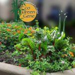 Small Eco Food Garden
