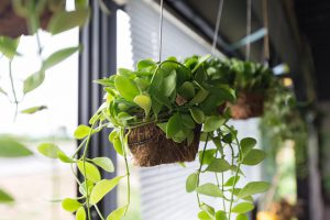 hanging pots_credit Red Mango/Shutterstock.com