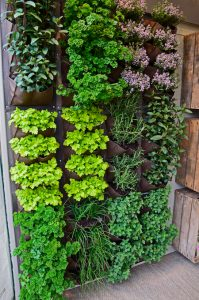 vertical garden_Photo by Gardens by Design/Shutterstock.com