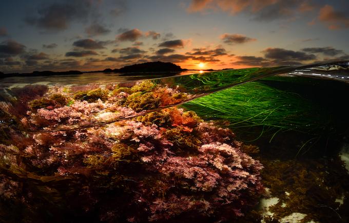 Intertidal_credit Sean Hunter Brown