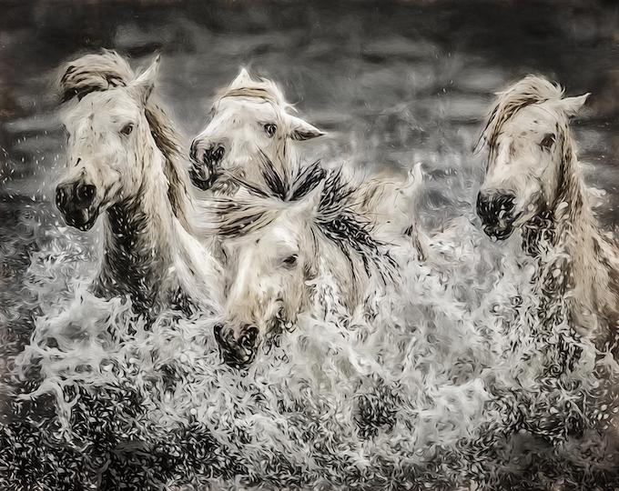 Horses of the Sea_credit Jeff Nadler